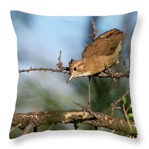 Bird Throw Pillow featuring the photograph Crested Hornero by Pablo Rodriguez Merkel