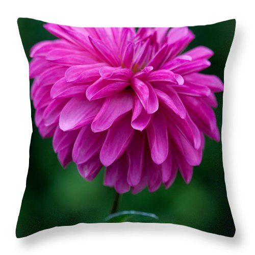 Flower Throw Pillow featuring the photograph Dahlia Field by Paul Slebodnick
