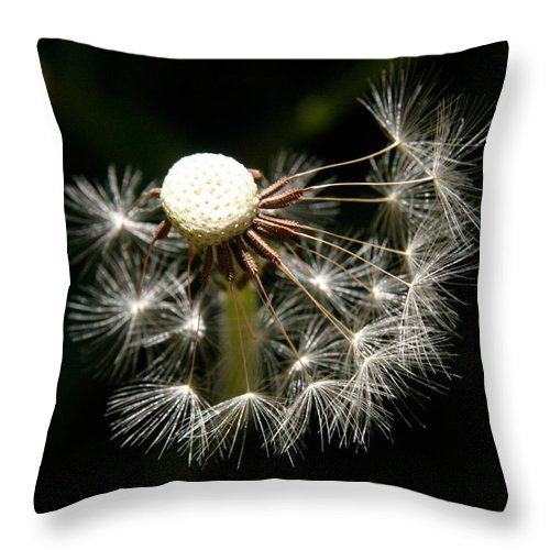 Dandelion Throw Pillow featuring the photograph Dandelion by Ralph A Ledergerber-Photography