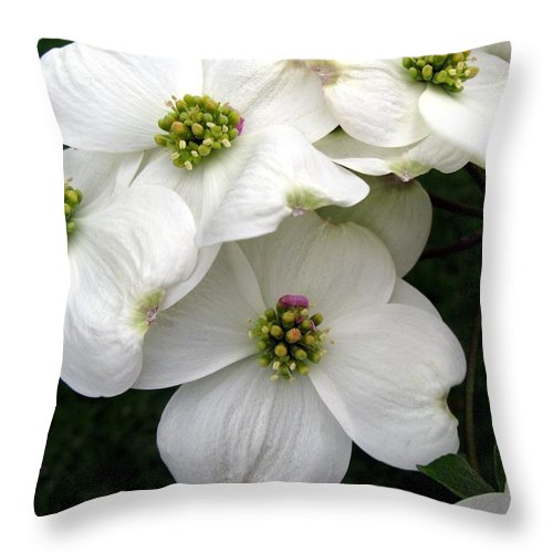 Dogwood Throw Pillow featuring the photograph Dogwood Branch by Carol Sweetwood