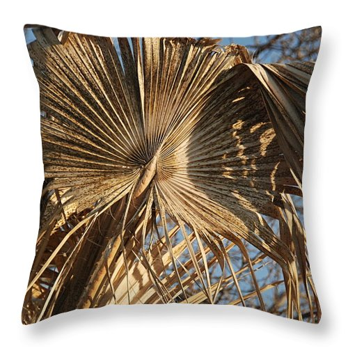 Palm Throw Pillow featuring the photograph Dried Palm Fronds by Katherine Nutt