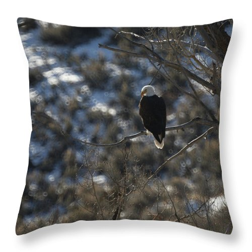 Animal Throw Pillow featuring the photograph Eagle In Tree by Ernie Echols