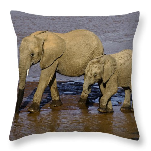 Africa Throw Pillow featuring the photograph Elephant Crossing by Michele Burgess