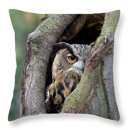 Fn Throw Pillow featuring the photograph Eurasian Eagle-owl Bubo Bubo Looking by Rob Reijnen