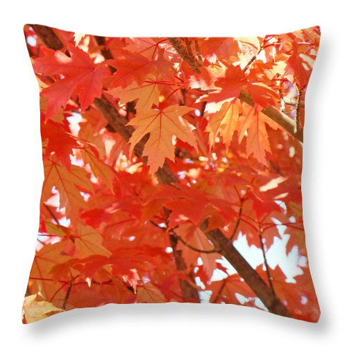 Autumn Throw Pillow featuring the photograph Fall Trees Colorful Autumn Leaves Art Baslee Troutman by Baslee Troutman
