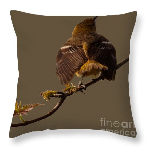 Finch Throw Pillow featuring the photograph Finch by Gaby Swanson