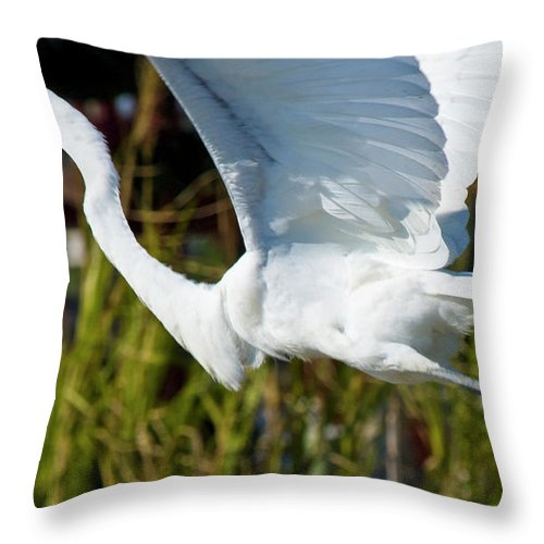 Wildlife Throw Pillow featuring the photograph Flight by Betsy Knapp