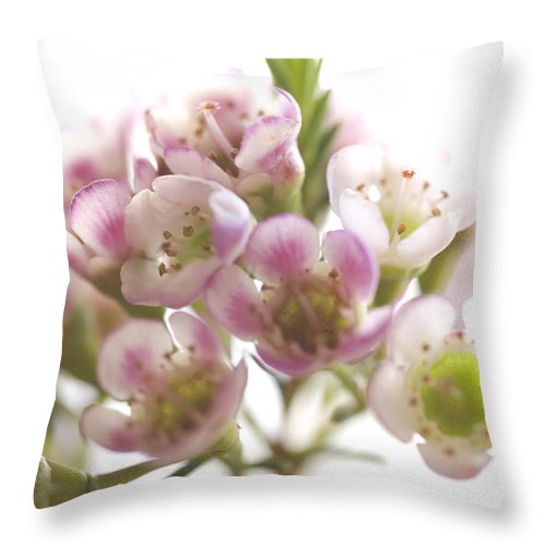 Flowers Throw Pillow featuring the photograph Flower Abstract by Jessica Wakefield