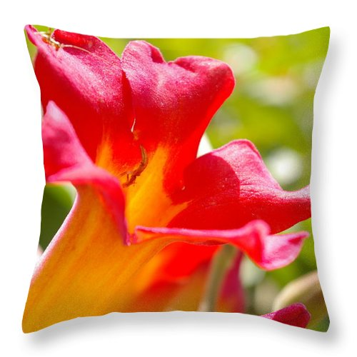 Flower Throw Pillow featuring the photograph Flower by Jera Sky