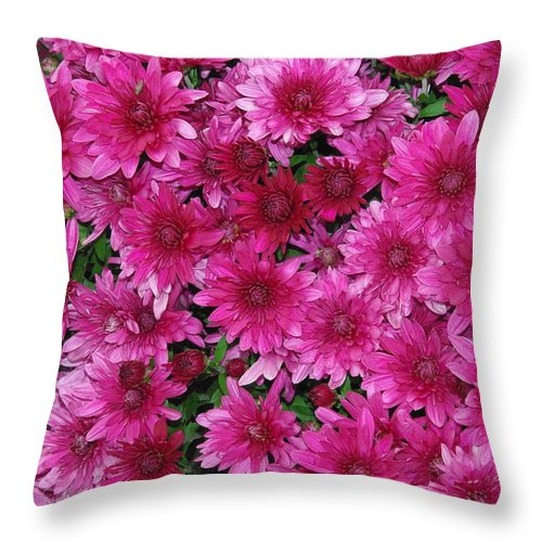 Mum Throw Pillow featuring the photograph Fuchsia Mums by Robyn Stacey