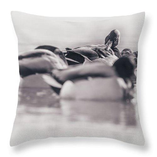 Duck Throw Pillow featuring the photograph Getting Ready For The Day by Annette Bush