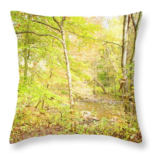Stream Throw Pillow featuring the photograph Glimpse Of A Stream In Autumn by A Gurmankin