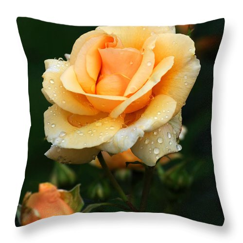 Rose Throw Pillow featuring the photograph Glowing Rose by Edward Sobuta