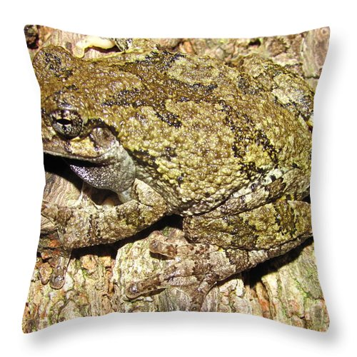 Western Maryland Gray Tree Frog Images Gray Tree Frog Photograph Prints Arborial Amphibian Prints Appalachian Mountain Forest Biodiversity Ecology Biology Nature Images Throw Pillow featuring the photograph Gray Tree Frog by Joshua Bales