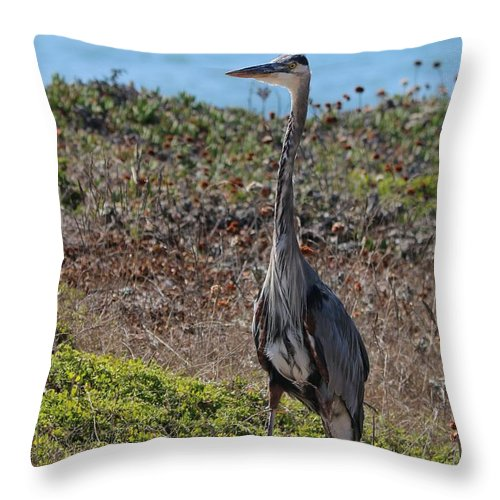 Great Blue Heron Throw Pillow featuring the photograph Great Blue Heron - 12 by Christy Pooschke
