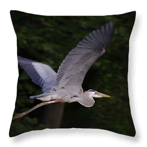 2d Throw Pillow featuring the photograph Great Blue Heron In Flight by Brian Wallace