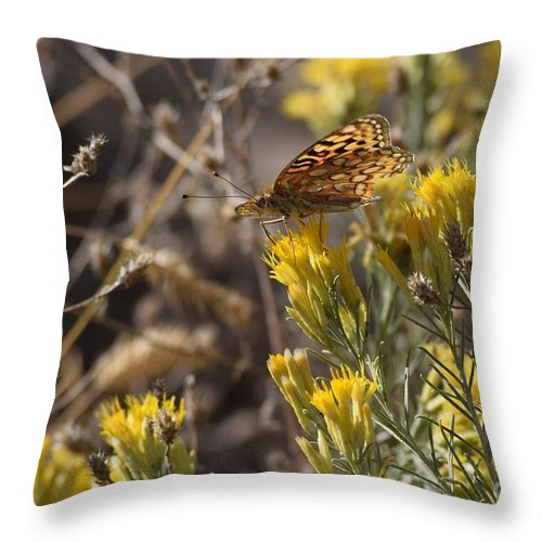 Butterflies Throw Pillow featuring the photograph Great Spangled Fritillary 2 by LKB Art and Photography