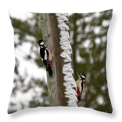 Lehtokukka Throw Pillow featuring the photograph Great Spotted Woodpeckers by Jouko Lehto