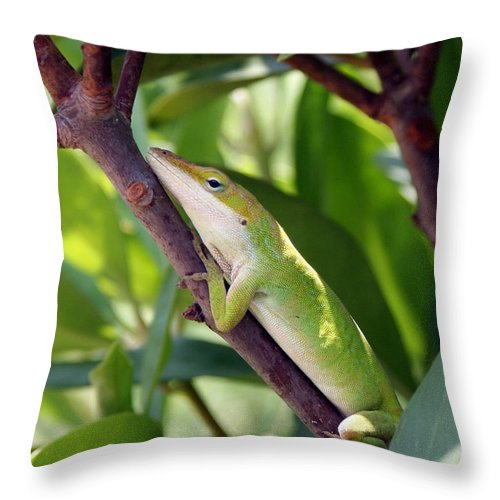 Photography Throw Pillow featuring the photograph Hanging On by Shelley Jones