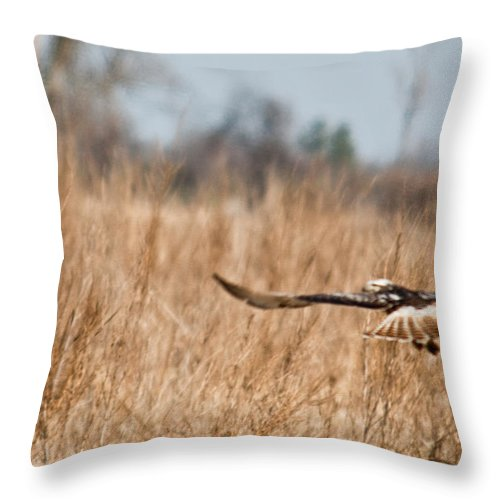 Hawk Throw Pillow featuring the photograph Hawk Soaring Over Field by Douglas Barnett