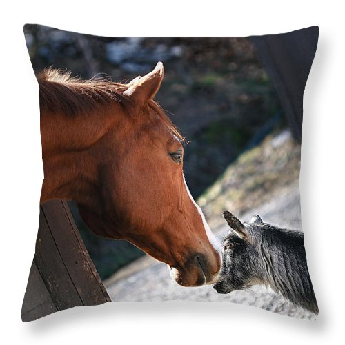 Horse Throw Pillow featuring the photograph Hello Friend by Angela Rath