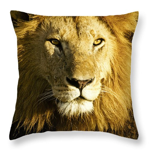Lion Throw Pillow featuring the photograph His Royal Highness by Michele Burgess