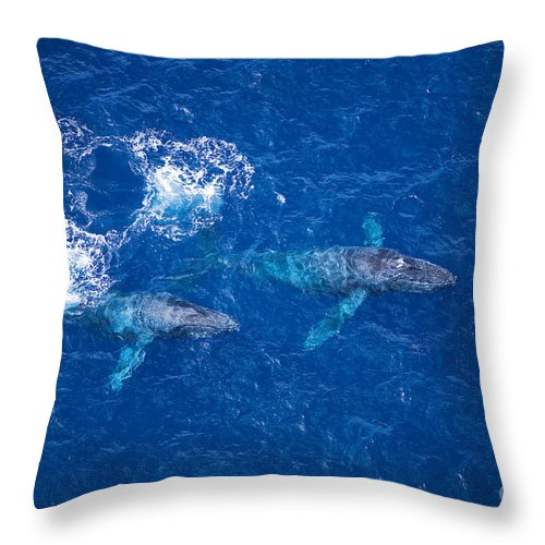 Above Throw Pillow featuring the photograph Humpback Whales Aerial by Ron Dahlquist - Printscapes