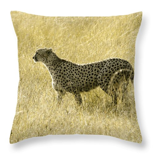 Africa Throw Pillow featuring the photograph Hunting Cheetah by Michele Burgess