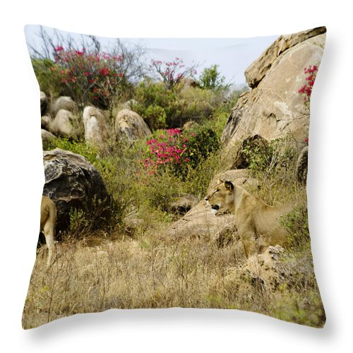 Lion Throw Pillow featuring the photograph Hunting Lionesses by Michele Burgess