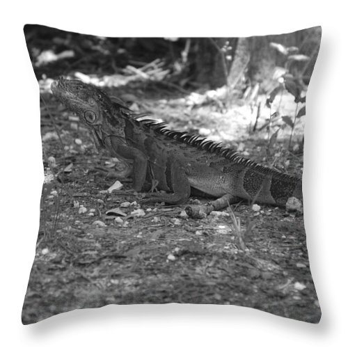 Black And White Throw Pillow featuring the photograph I Iguana by Rob Hans