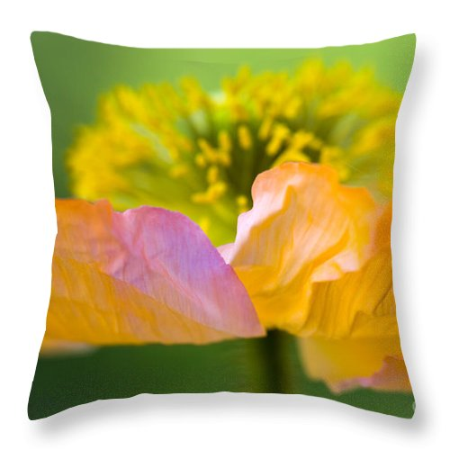 Flower Throw Pillow featuring the photograph Iceland Poppy by Silke Magino