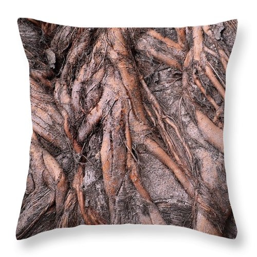 Root Throw Pillow featuring the photograph Intricate Root System by Yali Shi