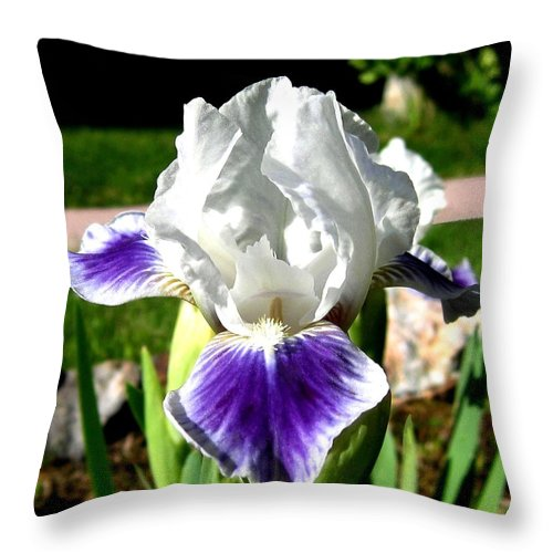 Iris Throw Pillow featuring the photograph Iris Elegance by Will Borden