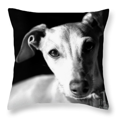 Editorial Throw Pillow featuring the photograph Italian Greyhound Portrait In Black And White by Angela Rath