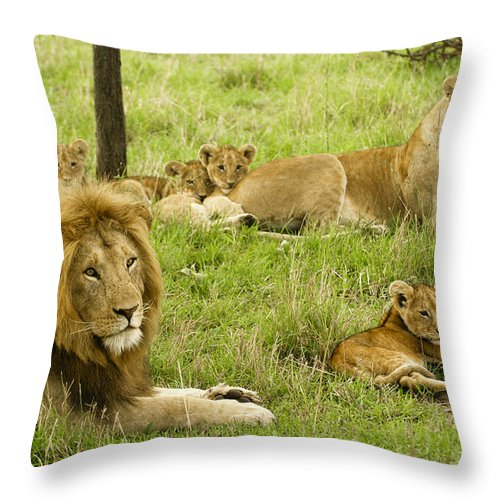 Lion Throw Pillow featuring the photograph It's All About Family by Michele Burgess