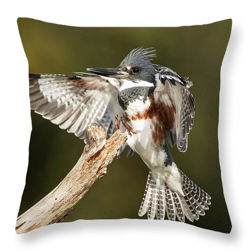 Kingfisher Throw Pillow featuring the photograph Kingfisher by Les Lenchner