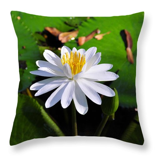 Flower Throw Pillow featuring the photograph Lady Of The Lake by David Lee Thompson