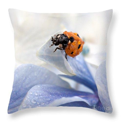 Ladybug Throw Pillow featuring the photograph Ladybug by Nailia Schwarz