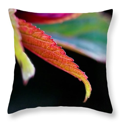 Macro Throw Pillow featuring the photograph Leaf Study Iv by Lauren Radke