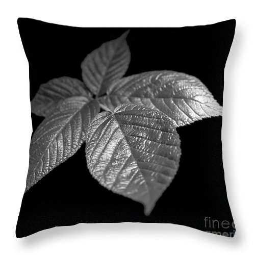 Plant Throw Pillow featuring the photograph Leaves by Tony Cordoza