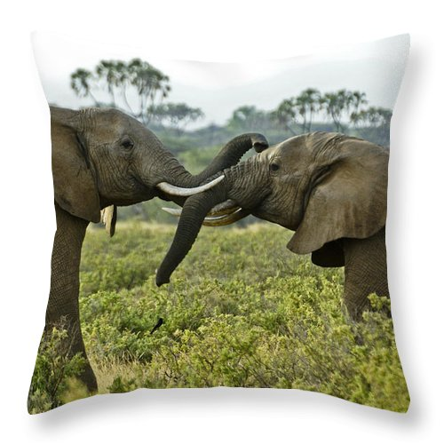 Africa Throw Pillow featuring the photograph Let's Get Acquainted by Michele Burgess
