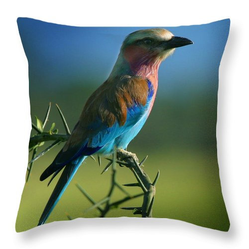 Bird Throw Pillow featuring the photograph Lilac Breasted Roller by Joseph G Holland