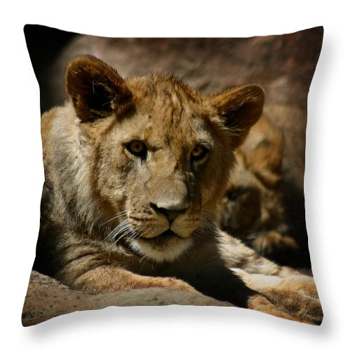Lion Throw Pillow featuring the photograph Lion Cub by Anthony Jones