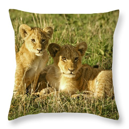 Lion Throw Pillow featuring the photograph Little Lions by Michele Burgess