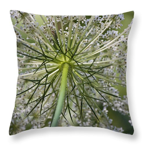 Queen Anne's Lace Throw Pillow featuring the photograph Look Up by Teresa Mucha
