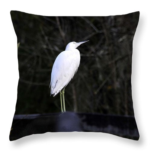 Looking Throw Pillow featuring the photograph Looking by David Lee Thompson