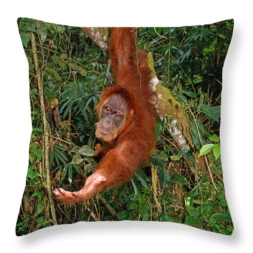 Orangutan Throw Pillow featuring the photograph Looking For A Handout by Michele Burgess