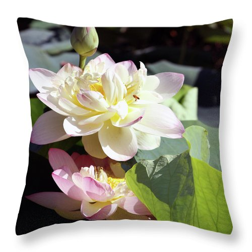 Lotus Throw Pillow featuring the photograph Lotus in Bloom by John Lautermilch