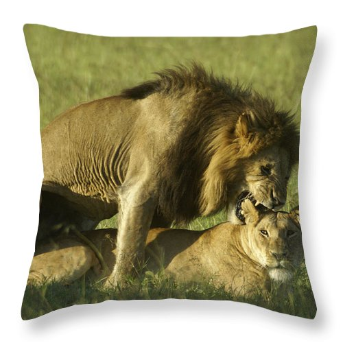 Africa Throw Pillow featuring the photograph Love Bite by Michele Burgess