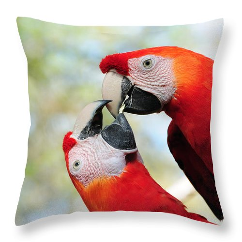 Bird Throw Pillow featuring the photograph Macaws by Steven Sparks